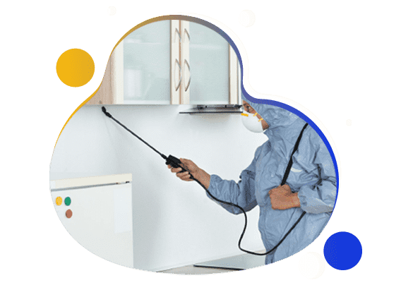 Affordable Pest Control Service