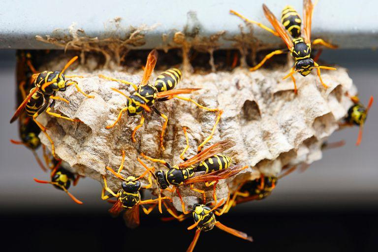 Pest Control Glen Iris